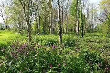 Spring woods.