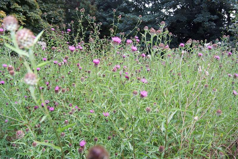 A glimpse of the colour in the wildflower meadow - your own private mini nature reserve.