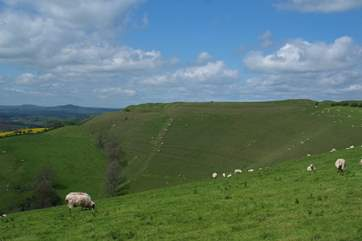 This is iron age Eggardon Hill just a few miles away. A wonderful place for a walk, offering panoramic views.