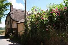 Ivy Cottage - Holiday Cottage - 8.5 miles SW of South Molton