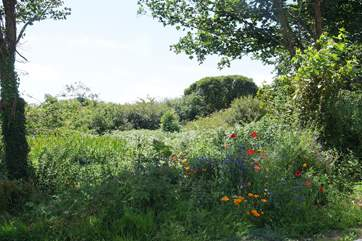 Meadow flowers in your garden, just across the quiet country lane from the cottage.
