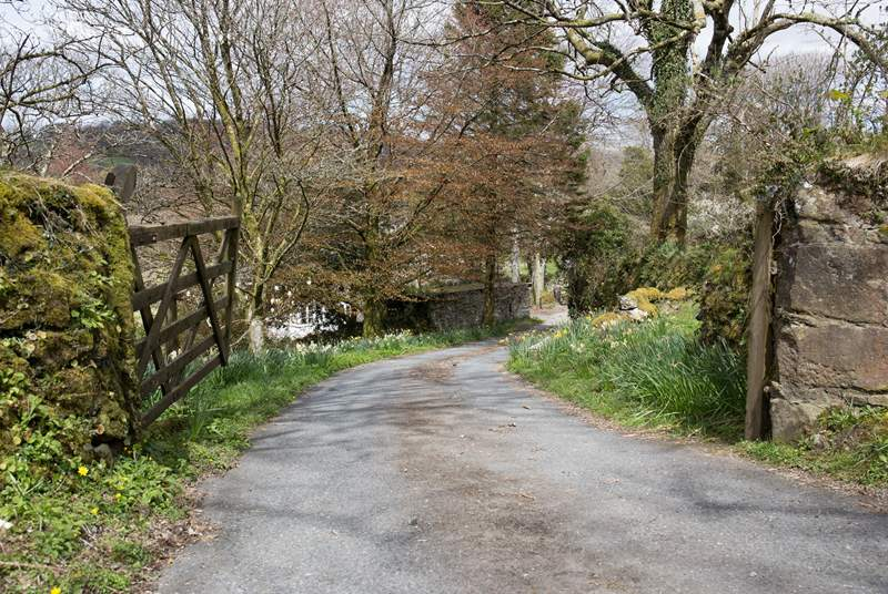 The driveway down to Walkham Valley Cottages.