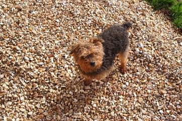 Four legged friends will love the safely enclosed garden and all the space. There is even somewhere to wash muddy paws.