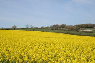 Rural Dorset in full bloom.