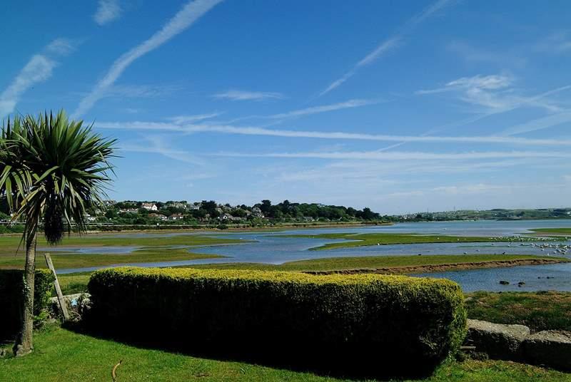 Hayle estuary is a bird watchers' paradise.