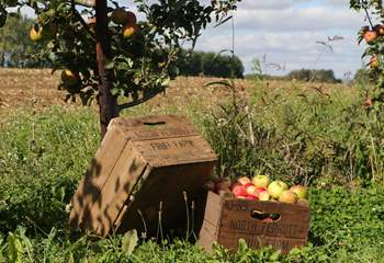 Many of the products stocked at the Farm Shop are produced locally. The Apple Orchards at North Perrott produce the famous apple juice.