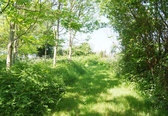 Guests can also stroll and picnic in the magical woodland here, with mown paths, open meadow and wonderful valley views.