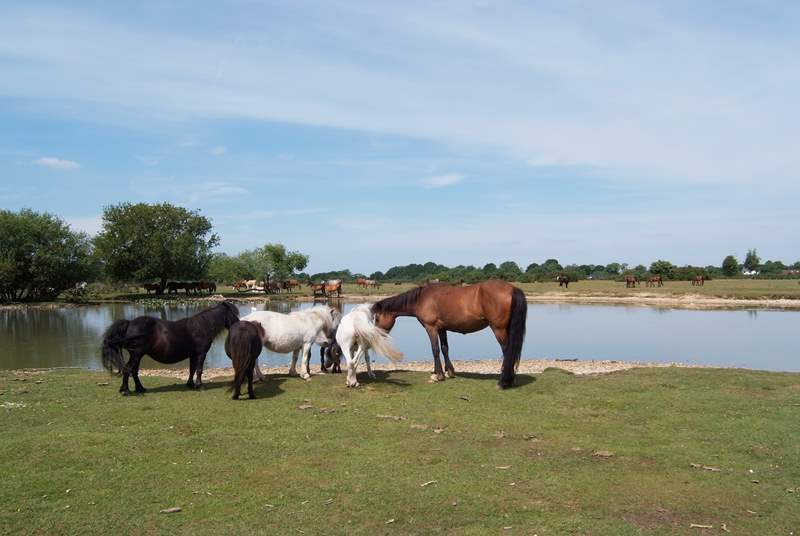 The New Forest, famous for the free-range ponies, is idyllic for walks and cycle rides.