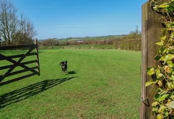 This is Milo, who lives on site with the owners,  showing off the wonderful space that your four-legged friends will have.