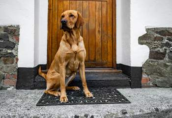 We know your hounds will love the back garden and the open space to explore North Devon.  We just ask they are on their best behaviour.