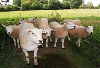 The sheep live in an adjacent meadow - they all have their own names!