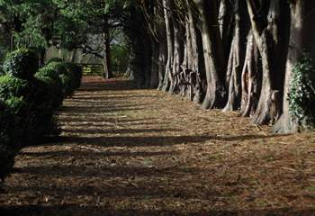 This grand avenue of trees links the Manor House gardens to The Pump House.