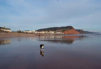 The beaches along the Jurassic Coast have dog friendly areas all year round, and restrictions are then lifted after September.