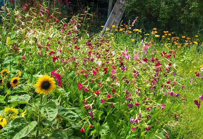 The lovely wild flower patch.