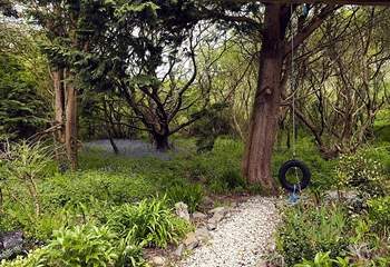 The woods are full of bluebells in May.