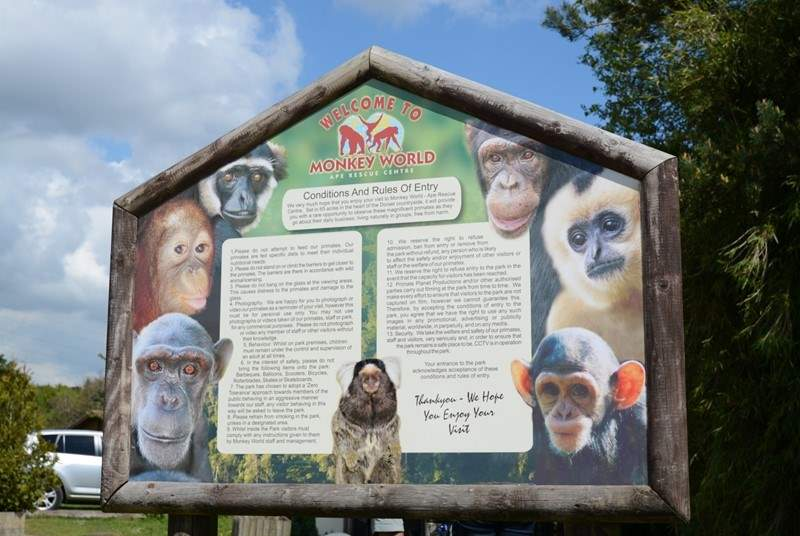 Nearby Monkey World, is a 65-acre ape and monkey sanctuary and rescue centre.