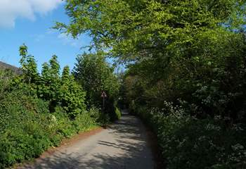 The lane approaching the cottage.