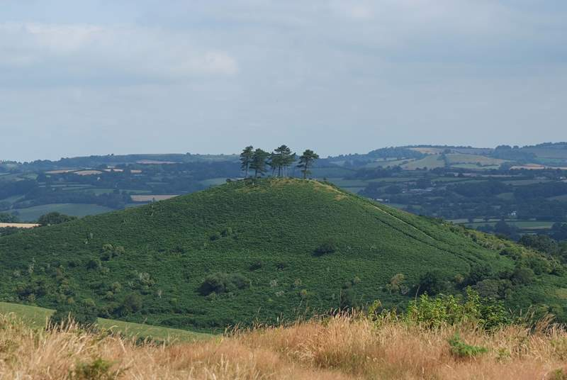 When you spot this iconic hill outside Bridport you will know that you are a stone's throw from the farm.