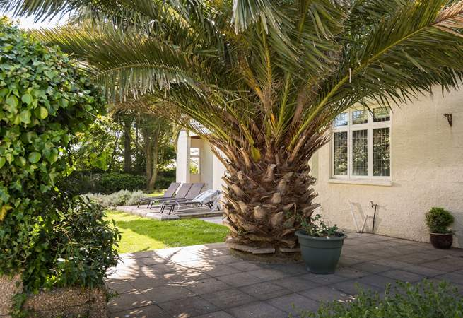 There is an amazing palm in the garden.