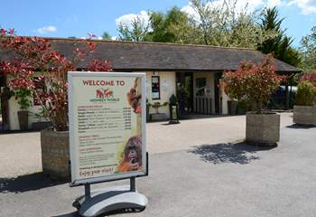 Monkey World is a primate rescue and rehabilitation centre, between Dorchester and Wareham.
