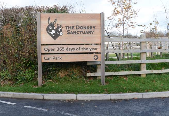 The Donkey Sanctuary at nearby Salcombe Regis is home to hundreds of rescued Donkeys and Mules, delightful for all the family, admission is free.