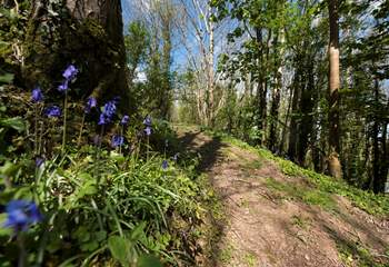 There is a lovely path behind the yurts for you to explore.