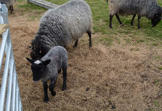 Meet some of the lovely farm animals during your stay.