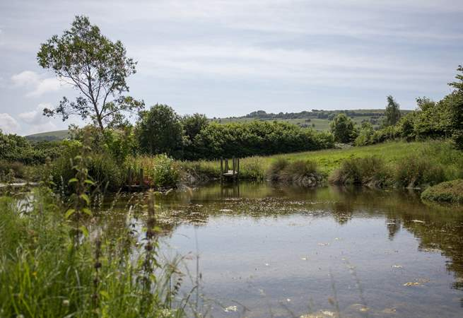 This beautiful pond is just across the road from the farm.
