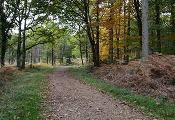 New Forest National Park, just a short drive away, looks wonderful all year round, acres of ancient woodland, and miles of footpaths and cycle tracks invite you to explore.