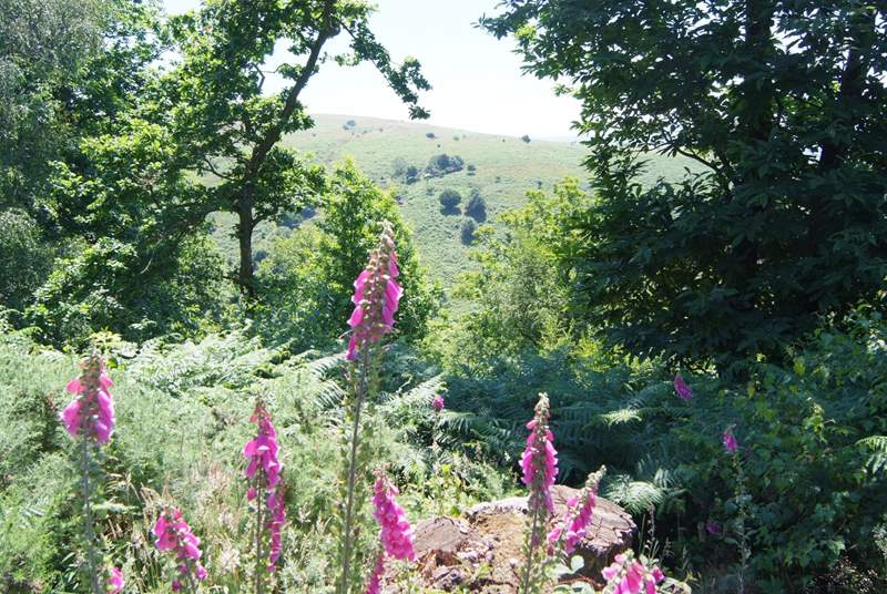 The Quantock Hills Area of Outstanding Natural Beauty, shaded woodland, deep valleys, and wide open moorland with panoramic views.
