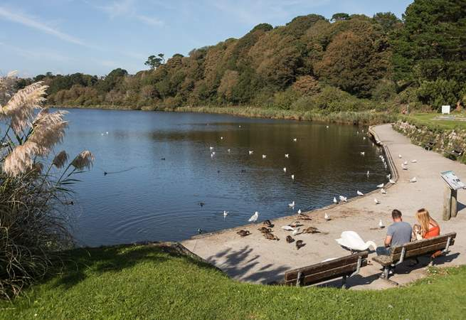 Swanpool is a fun place to feed the ducks and swans and is just behind the beach.