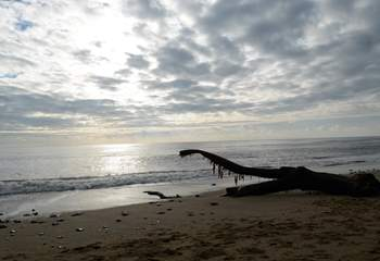 Driftwood on Monmouth beach, 5 minutes from Cobb Cottage, or could it be a Diplodocus?