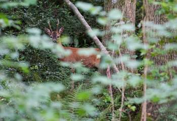 You may even by lucky enough to encounter a Roe Deer.