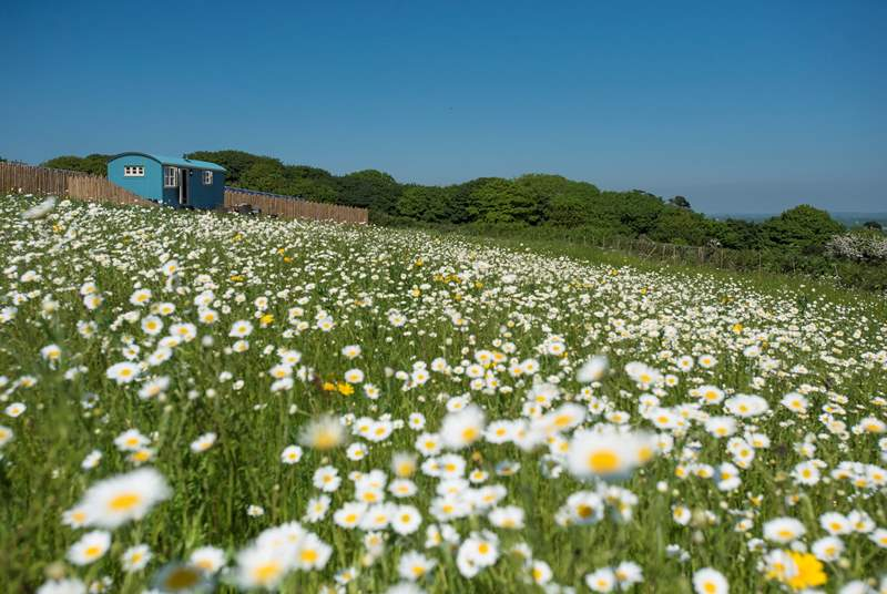 Mount View Retreat sits in a wild-flower meadow with Mount View Sunrise and Mount View Horizon safari tents as its neighbours.