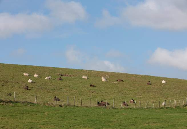 Take a walk in the surrounding countryside. The nearby village of Godshill can be easily reached on foot.