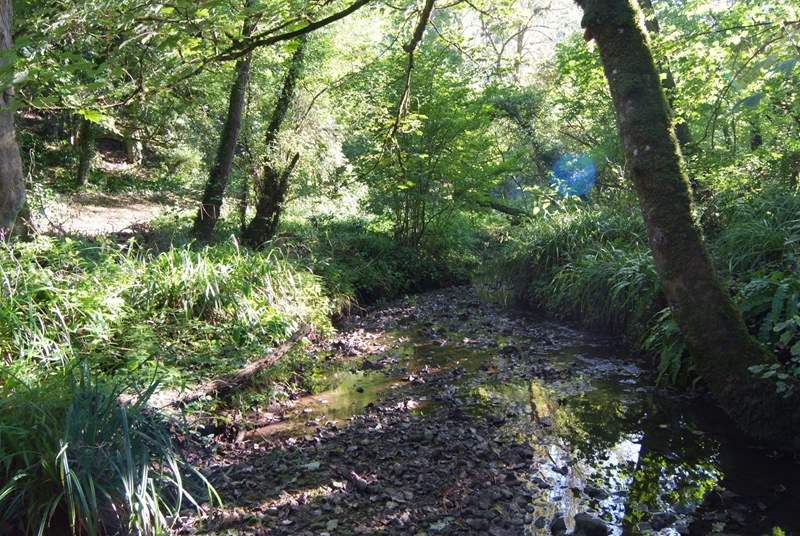 There is a gorgeous little woodland where all are welcome with a stream just a stroll away.