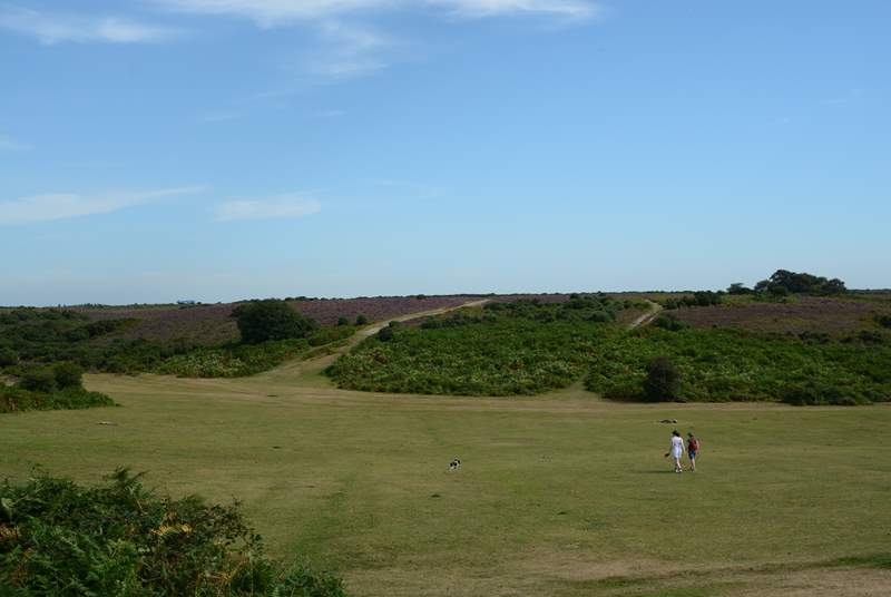 Miles of open space is characteristic of the New Forest National Park.