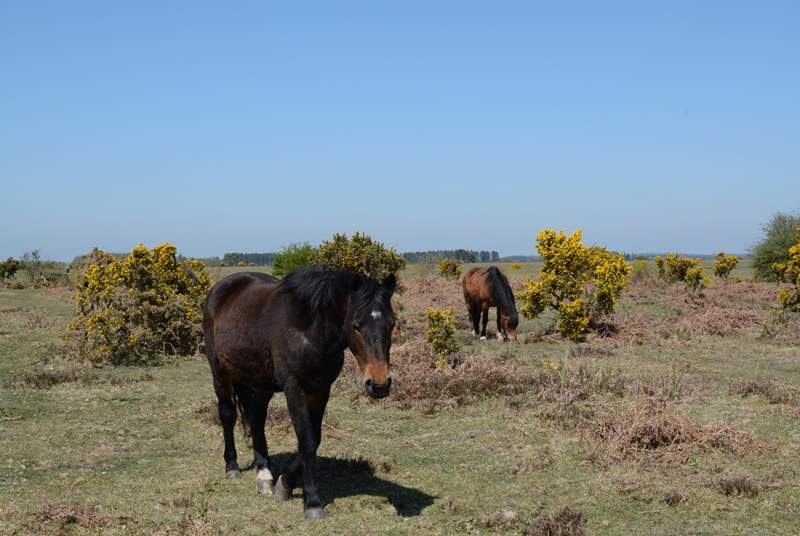 A one hour drive will take you to the New Forest, where ponies, cattle, sheep and pigs roam free. Miles of paths and cycle tracks take you through ancient woodland and over open heath.