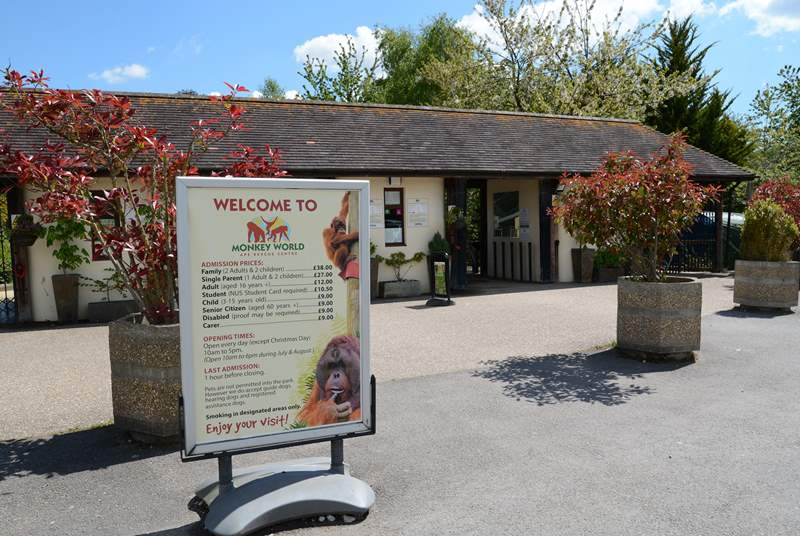 If you like primates, Monkey World is a rescue and rehabilitation centre, just eight miles from Beehive Cottage.
