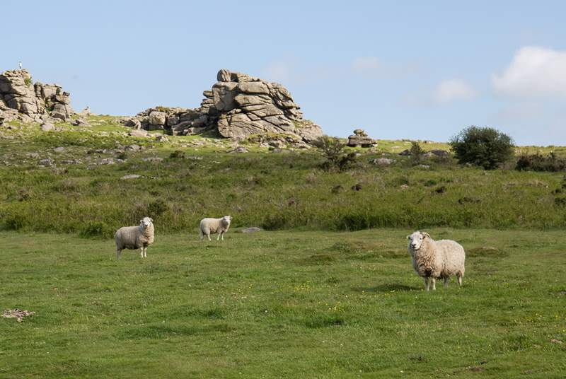 The scenery on Dartmoor is spectacular.