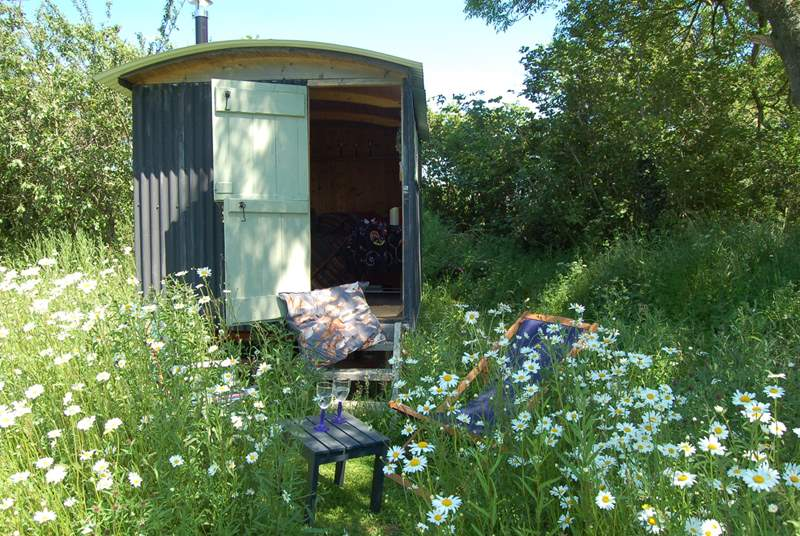 Your very own Shepherd's Hut in the wildflower meadow - this is something rather special indeed!
