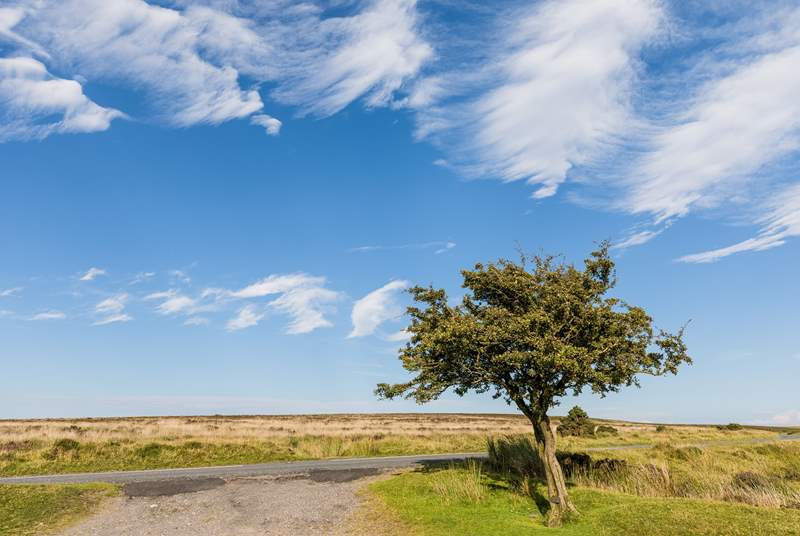 If walking is your thing, infamous Exmoor National Park is just half an hour away by car.