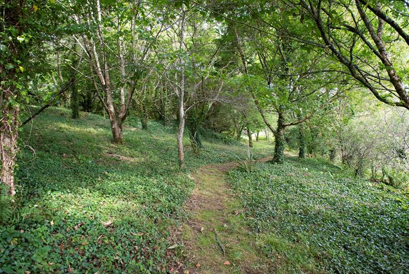 The space between the manicured gardens and woodland, leading to the 'badger trail' - this is carpeted with bluebells in-season.