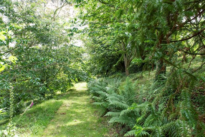 There are lots of rare plants and unusual species throughout the mature gardens which the owner has sourced and grown herself - here you can see some Monkey Puzzle tree branches on the right-hand side.