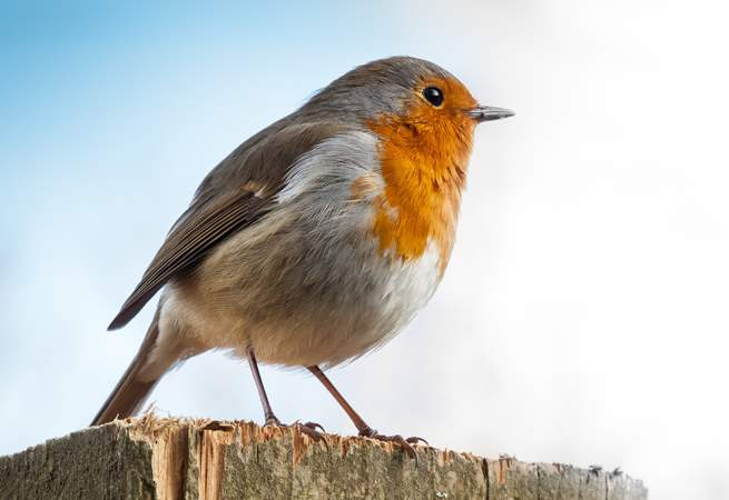 Primrose Cottage has it's own resident robin who likes to visit. Be sure to say hello, he is very friendly.