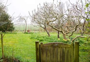Garden leads onto the orchard/meadow with views out towards Berwick Church.