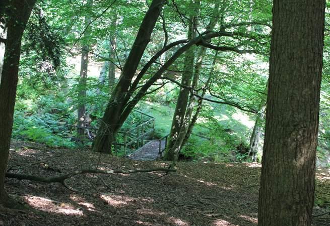 Roam ancient woodlands.