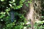 Keep an eye out for the local birdlife.