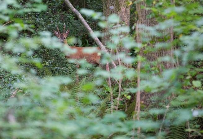 You may even be lucky enough to see roe deer.