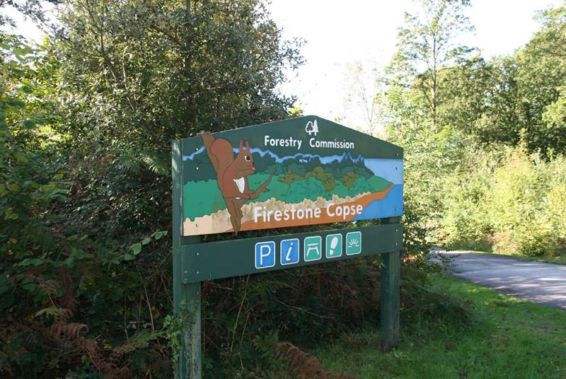 Spend the day exploring the forest, within a five minute drive from Myrtle Dene.